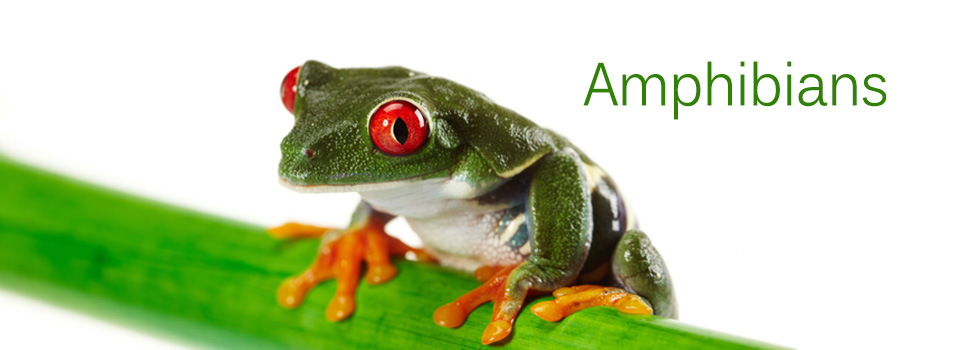 Amphibians960x3502