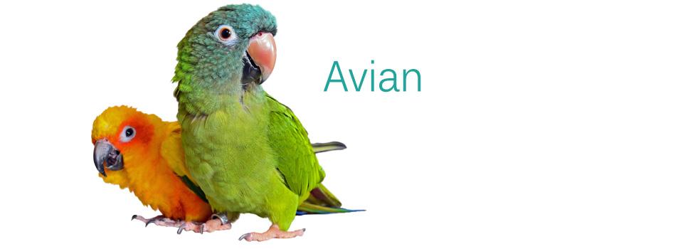 Avian960x3501