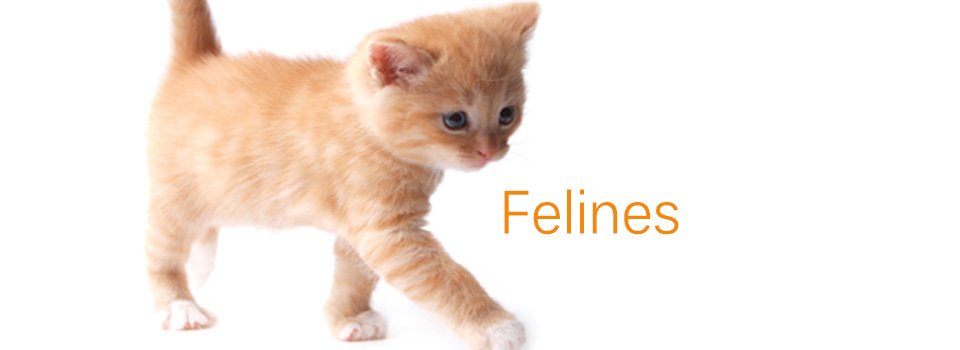 Felines960x3502