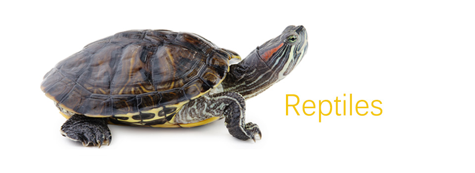 Reptiles960x3503