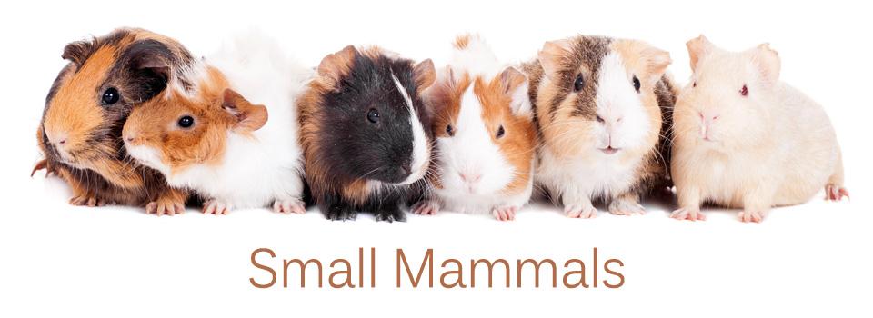 Small-Mammal960x3501